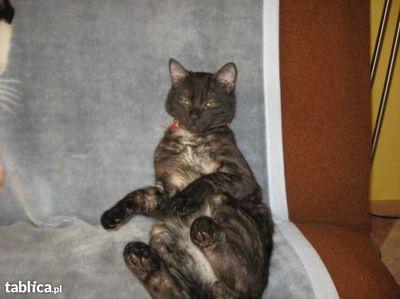 Oglądasz obrazki z tematu: Dymny kotek zaginął w Starosielcach/Klepaczach