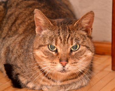 Oglądasz obrazki z tematu: Pręgowana kotka znaleziona na ul. Antoniukowskiej