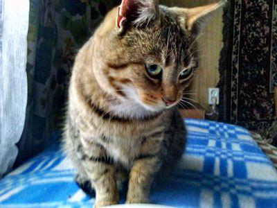 Oglądasz obrazki z tematu: Szara pręgowana kotka znaleziona na Wysockiego