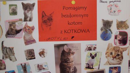Oglądasz obrazki z tematu: Kotki dziękują dzieciom z Przedszkola w Choroszczy