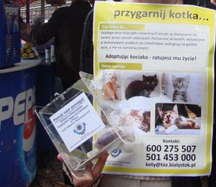Oglądasz obrazki z tematu: Kotkowo na II Międzynarodowej wystawie psów rasowych w Białymstoku
