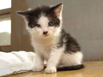 Oglądasz obrazki z tematu: Trzy maleńkie kocie biedki czekają na kochający dom