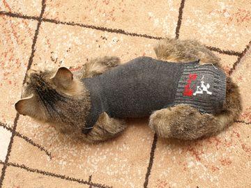 Oglądasz obrazki z tematu: Sterylizacja kotki i opieka nad nią po zabiegu