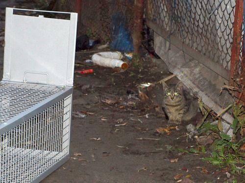 Oglądasz obrazki z tematu: Pomóżmy kotkom z Jurowieckiej