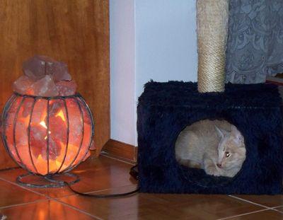 Oglądasz obrazki z tematu: Kotek Kubuś pozdrawia