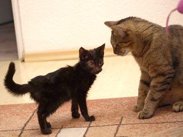 Oglądasz obrazki z tematu: Szczotka powoli staje się kotem