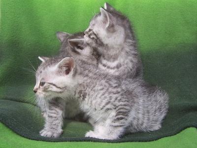 Oglądasz obrazki z tematu: Nowe kocie biedy -  maluszki z Leśnej Doliny - happy end :-)