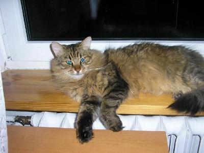 Oglądasz obrazki z tematu: Kotek Kuba odnaleziony!