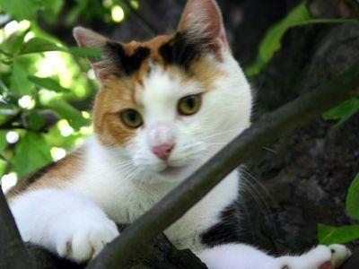 Oglądasz obrazki z tematu: Luśka - koteczka tricolor zaginęła w ok. Al. Jana Pawła II