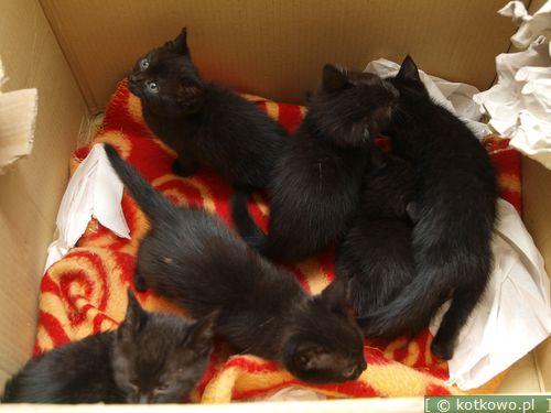 Oglądasz obrazki z tematu: Sześć niewinnych kociąt wyrzuconych na bruk