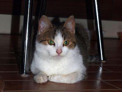 Oglądasz obrazki z tematu: Biało szary kotek zaginął na ul. Chełmońskiego (Wygoda)
