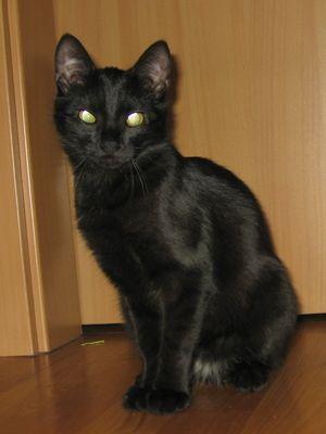 Oglądasz obrazki z tematu: Balbina - czarna koteczka zaginiona na os. TBS