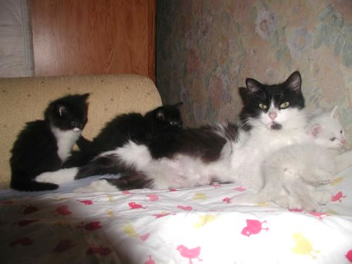 Oglądasz obrazki z tematu: Czarno-biała kotka zaginiona w okolicach ul. Skorupskiej