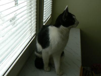 Oglądasz obrazki z tematu: Biało-czarna kotka zaginęła na os. Dojlidy