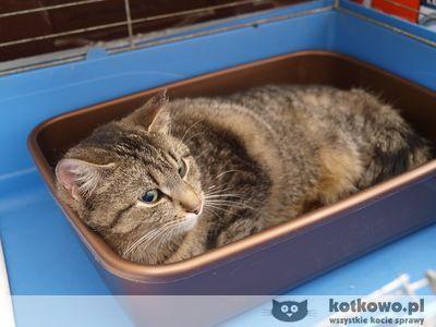 Oglądasz obrazki z tematu: Ciężarna kotka  w worku i morderstwo na Madro
