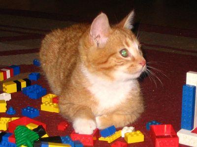 Oglądasz obrazki z tematu: Rudy kotek zaginął w okolicach ul. Zwycięstwa