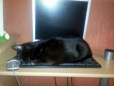 Oglądasz obrazki z tematu: Czarna kotka zaginiona w ok. ul. Żeromskiego 7 - odnaleziona