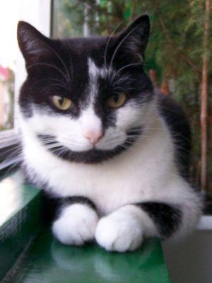 Oglądasz obrazki z tematu: Czarno-biały kot zaginął w ok. ul. Gajowej / Zagórnej / Porzeczkowej