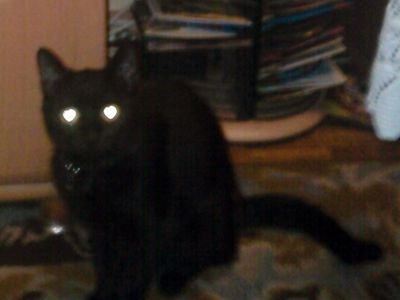 Oglądasz obrazki z tematu: Czarna kotka zaginęła w okolicach sklepu Lemir