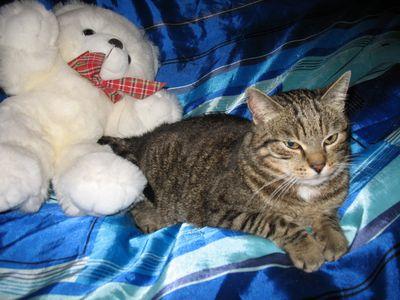 Oglądasz obrazki z tematu: Kotka tygrysek znaleziona przy ul. Zagórnej