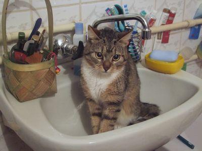 Oglądasz obrazki z tematu: Szaro-biała koteczka zginęła przy ul. Mieszka I