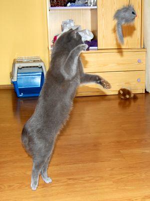 Oglądasz obrazki z tematu: Cindy w nowym domu