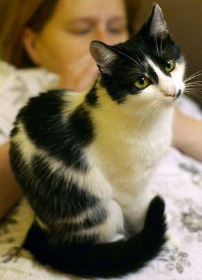 Oglądasz obrazki z tematu: Biało-czarna kotka zaginęła w okolicach ul. Dobrej