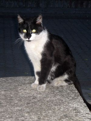 Oglądasz obrazki z tematu: Czarno-biały kot znaleziony przy ul. Starobojarskiej