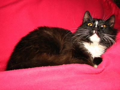 Oglądasz obrazki z tematu: Długowłosy kot został znaleziony w okolicach ul. Boboli