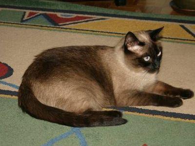 Oglądasz obrazki z tematu: Brązowo-beżowa kotka z ul. Palmowej - odnaleziona