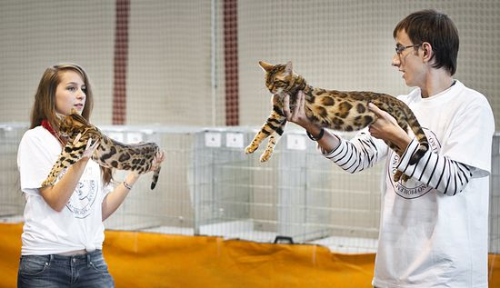 Oglądasz obrazki z tematu: Wystawa kotów - fotorelacja