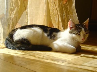 Oglądasz obrazki z tematu: Biało-szary kot zaginął na Nowym Mieście