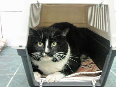Oglądasz obrazki z tematu: Czarno-biały kot znaleziony przy ul. Boboli