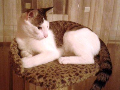 Oglądasz obrazki z tematu: Biało szary kotek zaginął w okol. Turczyna