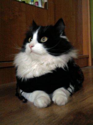 Oglądasz obrazki z tematu: Biało czarny kotek zaginął w Ogrodniczkach