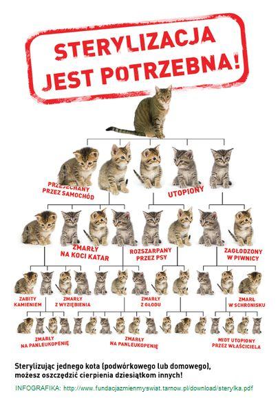 Oglądasz obrazki z tematu: Akcja sterylizacja 3.0 - zniżki na sterylizacje w lecznicach partnerskich kotkowo.pl