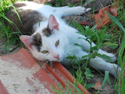 Oglądasz obrazki z tematu: Biało czarny kotek zaginął w Supraślu