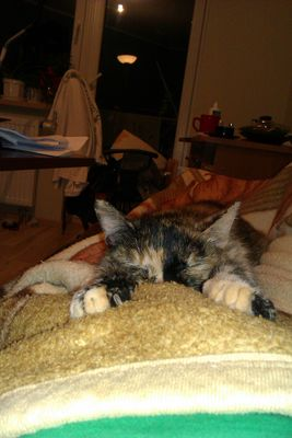Oglądasz obrazki z tematu: Kotka zaginęła w Wasilkowie