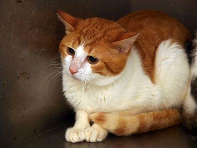 Oglądasz obrazki z tematu: Człowiek kotom zgotował ten los - Żółwiki mają domy :)