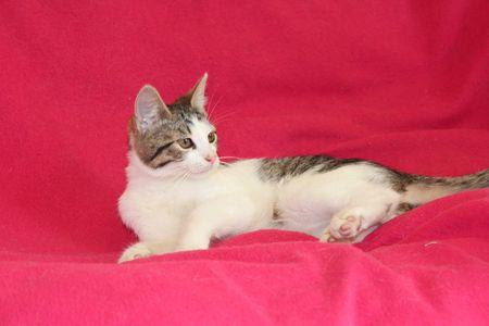 Oglądasz obrazki z tematu: Biało szara kotka zaginęła na ul. Zaścianki