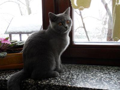 Oglądasz obrazki z tematu: Kotka niebieska z ul. Stromej wróciła do domu :)