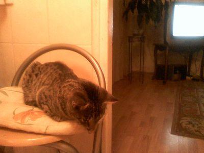 Oglądasz obrazki z tematu: Kotek zaginął na ul. Wierzbowej