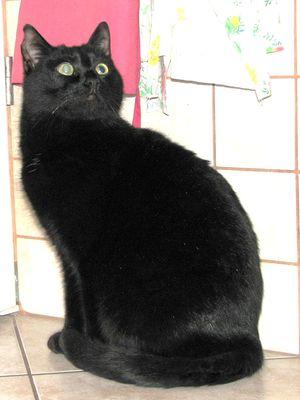 Oglądasz obrazki z tematu: Czarna kotka znaleziona na os Piaski