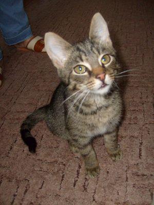 Oglądasz obrazki z tematu: Szary kotek znaleziony na Mieszka I