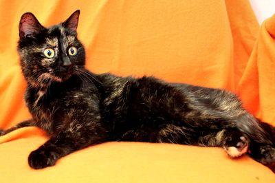 Oglądasz obrazki z tematu: Kocia Samosia - odmieniona ;)