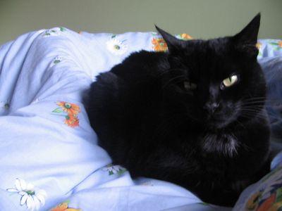 Oglądasz obrazki z tematu: Czarna kotka zaginęła na ul. Starobojarskiej