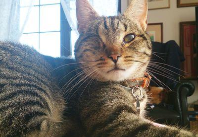 Oglądasz obrazki z tematu: Zaginął szary (bury) kot bez jednego oka