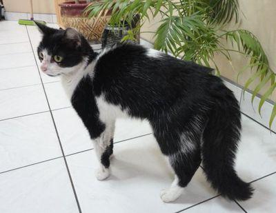 Oglądasz obrazki z tematu: Czarno biała koteczka znaleziona przy ul. Bema