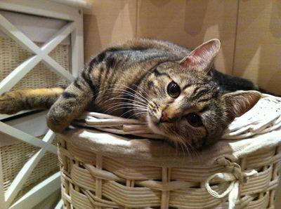 Oglądasz obrazki z tematu: Szara pręgowana kotka zaginęła w okolicy ul. Wesołej