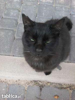 Oglądasz obrazki z tematu: Czarna kotka znaleziona na Antoniuku